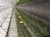 6. 農薬低減の取り組み(4ミリ防虫ネット、ラノーテープ、ノーカウント農薬)
