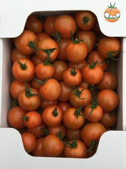おいしい中玉トマト2kg箱(販売終了)