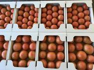 昔懐かしいトマト(販売終了)